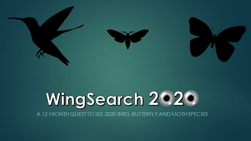 WingSearch2020 Logo