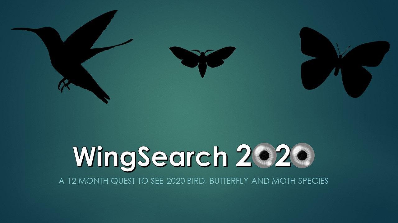 WingSearch2020